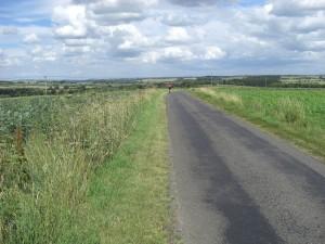 Small - El Camino